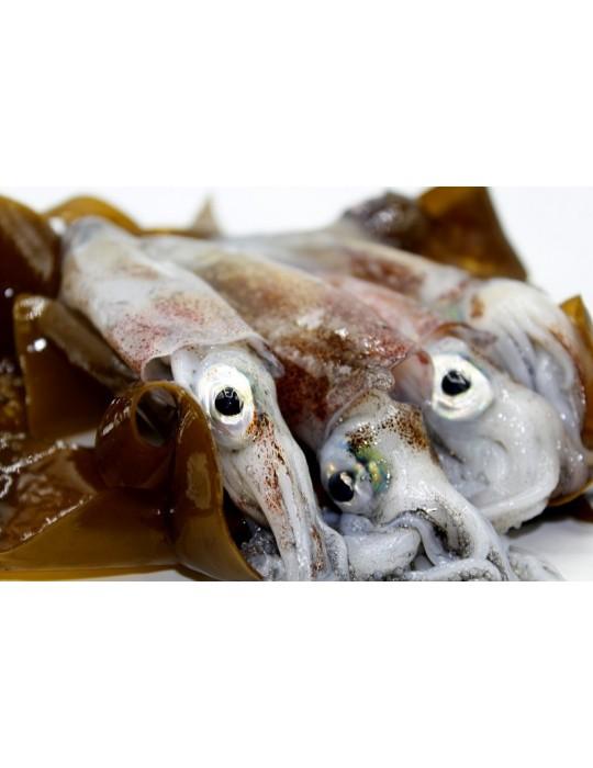 Calamar gallego