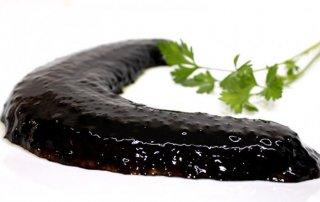 pepino-de-mar-gallego