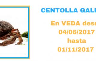 04-06-EN VEDA-CENTOLLA-GALLEGA