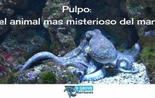 pulpo-post