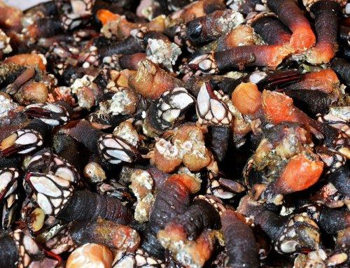 Algunos consejos para saber comprar marisco gallego: ¿cómo distinguirlo?