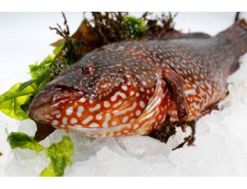 Pinto gallego, un pescado sostenible para toda la familia