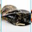 tipos marisco gallego