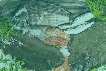 Pescados Gallegos
